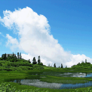 高谷池湿原