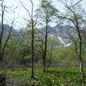 赤倉山南麓湿原