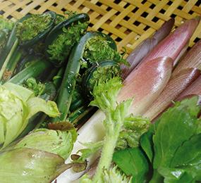 山菜(春)