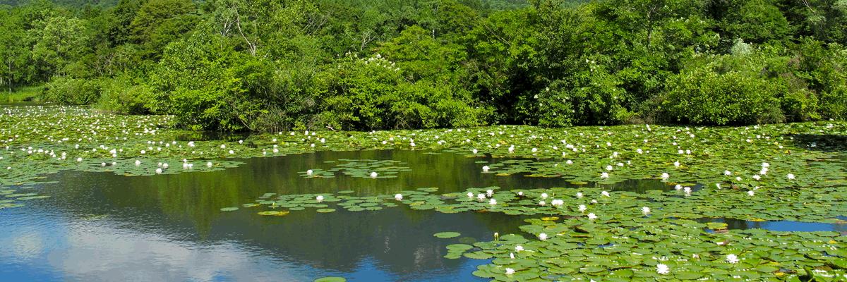 国立公園の自然環境・景観を守るために