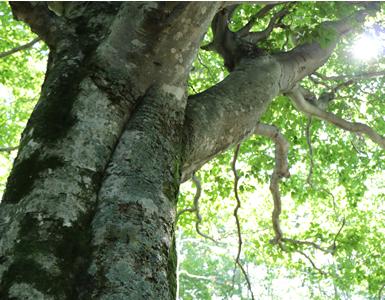 森林資源の保護